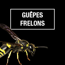 GUEPES & Frelons